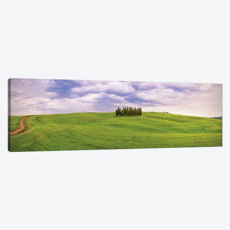 Italy, San Quirico d'Orcia. Cypress grove in panoramic.  Canvas Print #JYG570} by Jaynes Gallery Art Print