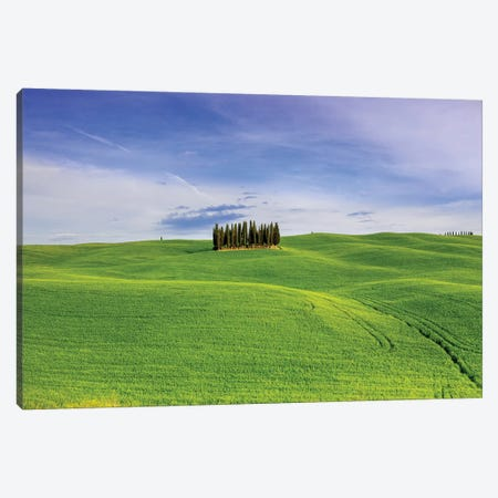 Italy, Tuscany, Val d'Orcia. Famous cypress grove.  Canvas Print #JYG576} by Jaynes Gallery Canvas Wall Art
