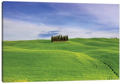 Italy, Tuscany, Val d'Orcia. Famous cypress grove.  Canvas Art Print