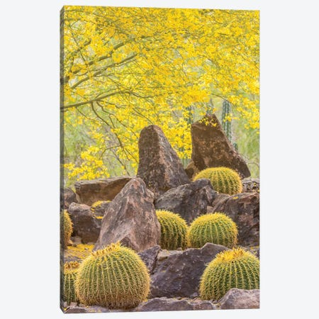 USA, Arizona, Desert Botanic Garden. Cactus garden and rocks.  Canvas Print #JYG603} by Jaynes Gallery Canvas Print