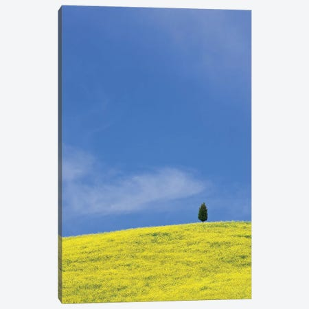Italy, Tuscany. Lone cypress tree on flower-covered hillside I Canvas Print #JYG61} by Jaynes Gallery Canvas Artwork