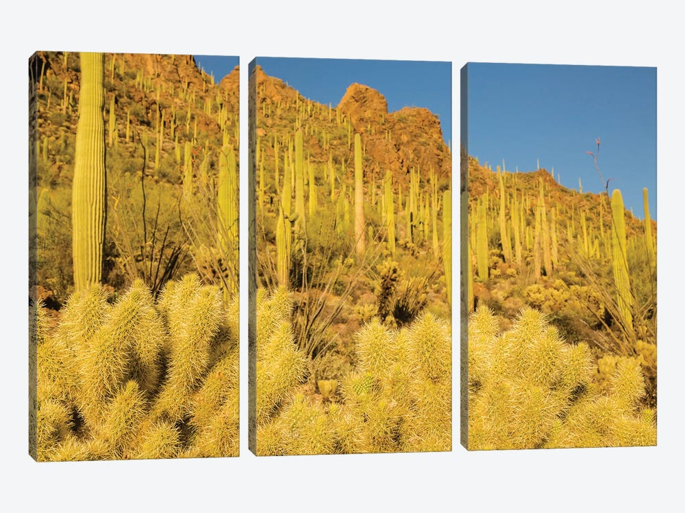 USA, Arizona, Tucson Mountain Park. Sonoran Desert landscape.  by Jaynes Gallery 3-piece Canvas Art