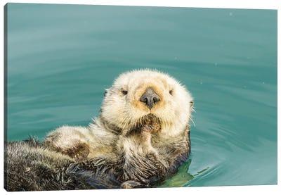 USA, California, San Luis Obispo. Sea otter waving. Canvas Art Print