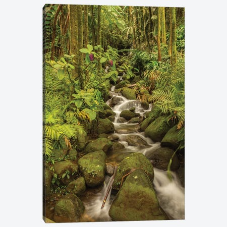 USA, Hawaii, Hawaii Tropical Botanical Garden. Tropical stream cascade over rocks. Canvas Print #JYG654} by Jaynes Gallery Art Print