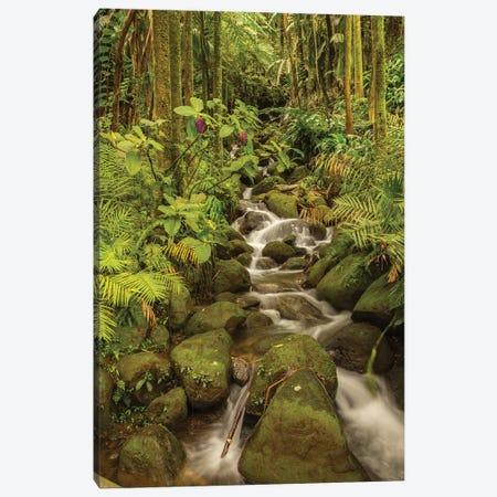 USA, Hawaii, Hawaii Tropical Botanical Garden. Tropical stream cascade over rocks. Canvas Print #JYG654} by Jaynes Gallery Art Print