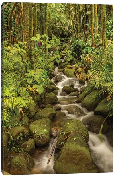 USA, Hawaii, Hawaii Tropical Botanical Garden. Tropical stream cascade over rocks. Canvas Art Print