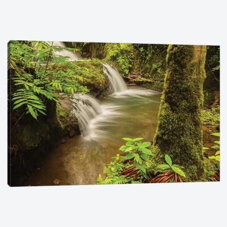 USA, Hawaii, Hawaii Tropical Botanical Garden. Waterfall scenic. Canvas Print #JYG655} by Jaynes Gallery Canvas Print