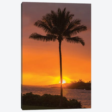 USA, Hawaii, Kauai, Lawai. Palm tree at sunset. Canvas Print #JYG657} by Jaynes Gallery Canvas Art Print