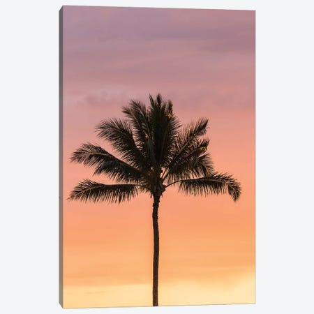 USA, Hawaii, Kauai, Lawai. Palm tree at sunset. Canvas Print #JYG658} by Jaynes Gallery Canvas Wall Art