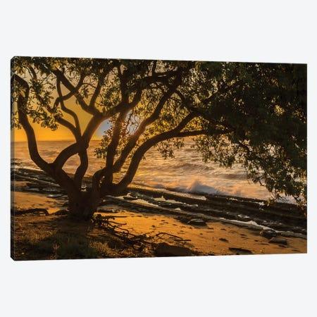 USA, Kauai, Wawalohi Beach Park. Sunset on ocean beach and trees. Canvas Print #JYG672} by Jaynes Gallery Canvas Art