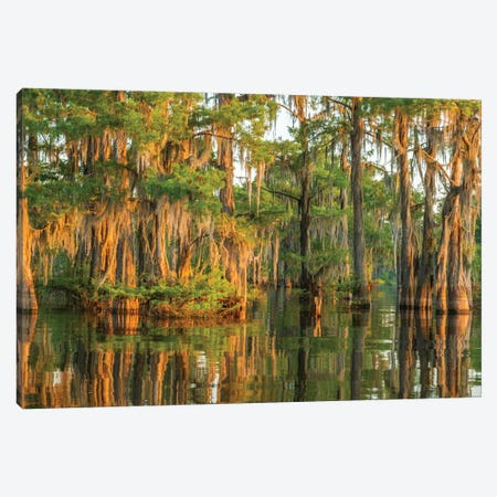 USA, Louisiana, Atchafalaya National Wildlife Refuge. Sunrise on cypress trees and Spanish moss.  Canvas Print #JYG673} by Jaynes Gallery Canvas Art