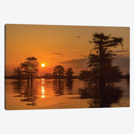 USA, Louisiana, Atchafalaya National Wildlife Refuge. Sunrise on swamp.  Canvas Print #JYG675} by Jaynes Gallery Canvas Art Print