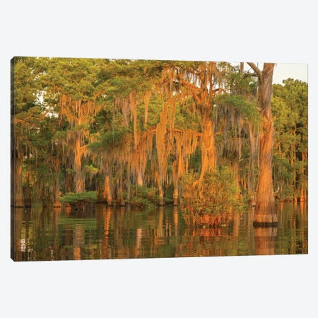 USA, Louisiana, Atchafalaya National Wildlife Refuge. Sunrise on swamp.  Canvas Print #JYG677} by Jaynes Gallery Canvas Print