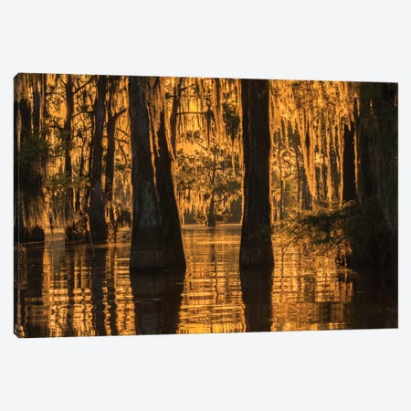 USA, Louisiana, Atchafalaya National Wildlife Refuge. Sunrise on swamp.  Canvas Print #JYG680} by Jaynes Gallery Canvas Art Print