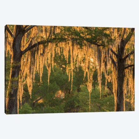 USA, Louisiana, Atchafalaya National Wildlife Refuge. Sunrise on swamp.  Canvas Print #JYG681} by Jaynes Gallery Art Print