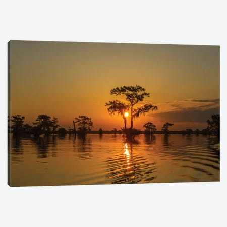 USA, Louisiana, Atchafalaya National Wildlife Refuge. Sunrise on swamp.  Canvas Print #JYG683} by Jaynes Gallery Canvas Print