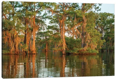 USA, Louisiana, Atchafalaya National Wildlife Refuge. Sunrise on swamp.  Canvas Art Print