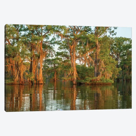 USA, Louisiana, Atchafalaya National Wildlife Refuge. Sunrise on swamp.  Canvas Print #JYG684} by Jaynes Gallery Canvas Artwork