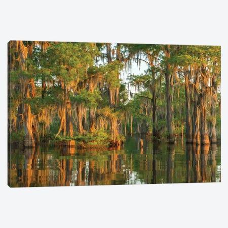 USA, Louisiana, Atchafalaya National Wildlife Refuge. Sunrise on swamp.  Canvas Print #JYG685} by Jaynes Gallery Canvas Artwork
