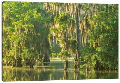 USA, Louisiana, Atchafalaya National Wildlife Refuge. Sunrise on swamp.  Canvas Art Print