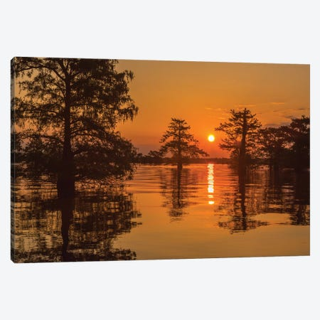 USA, Louisiana, Atchafalaya National Wildlife Refuge. Sunrise on swamp.  Canvas Print #JYG687} by Jaynes Gallery Canvas Artwork