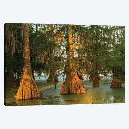USA, Louisiana, Atchafalaya National Wildlife Refuge. Sunrise on swamp.  Canvas Print #JYG688} by Jaynes Gallery Art Print