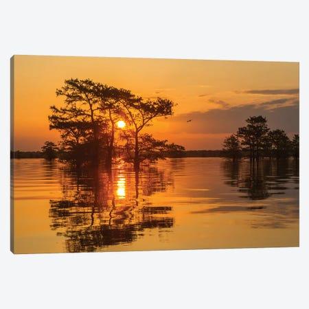 USA, Louisiana, Atchafalaya National Wildlife Refuge. Sunrise on swamp.  Canvas Print #JYG692} by Jaynes Gallery Canvas Art