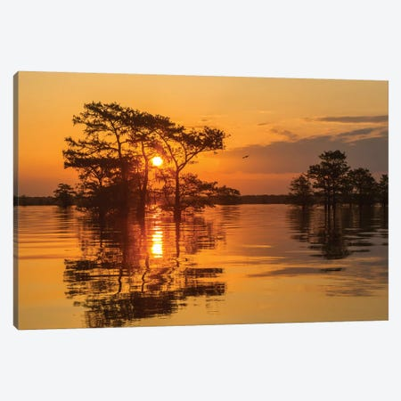 USA, Louisiana, Atchafalaya National Wildlife Refuge. Sunrise on swamp.  Canvas Print #JYG692} by Jaynes Gallery Canvas Art