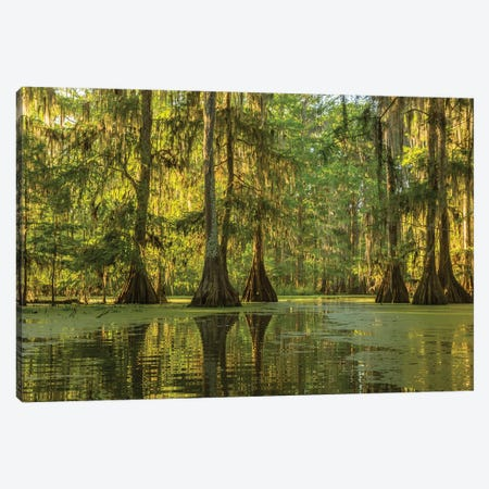 USA, Louisiana, Lake Martin. Cypress swamp forest.  Canvas Print #JYG696} by Jaynes Gallery Canvas Print