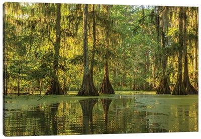 USA, Louisiana, Lake Martin. Cypress swamp forest.  Canvas Art Print