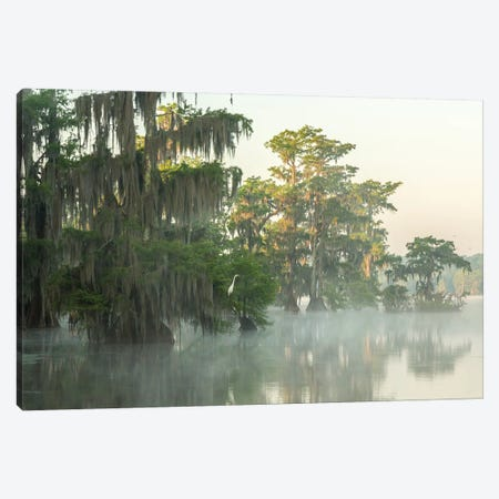 USA, Louisiana, Lake Martin. Foggy sunrise on swamp.  Canvas Print #JYG697} by Jaynes Gallery Art Print