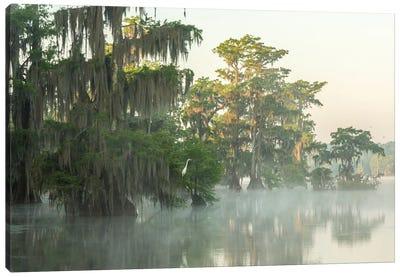 USA, Louisiana, Lake Martin. Foggy sunrise on swamp.  Canvas Art Print