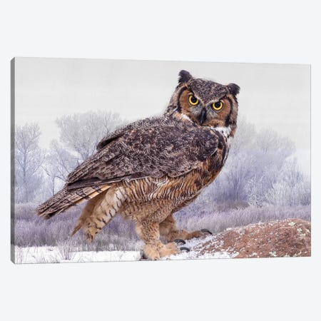 Canada, Ontario. Great horned owl close-up. Canvas Print #JYG6} by Jaynes Gallery Canvas Artwork