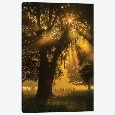 USA, Louisiana, Lake Martin. Tree silhouette in foggy sunrise.  Canvas Print #JYG703} by Jaynes Gallery Canvas Wall Art