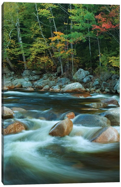 USA, New Hampshire. Autumn trees and flowing river. Canvas Art Print