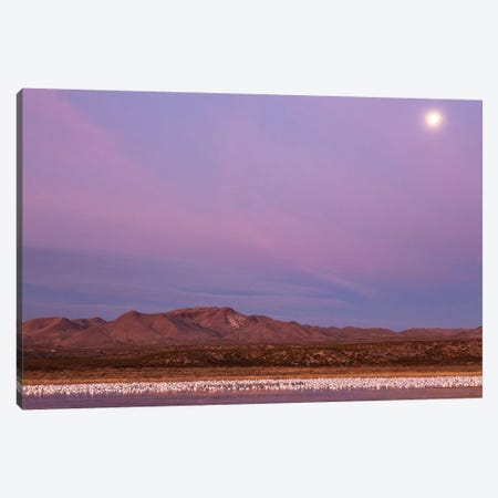 USA, New Mexico, Bosque del Apache National Wildlife Refuge. Flying birds and full moon at sunrise. Canvas Print #JYG731} by Jaynes Gallery Art Print