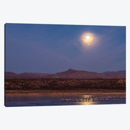 USA, New Mexico, Bosque del Apache National Wildlife Refuge. Full moon and bird flocks. Canvas Print #JYG732} by Jaynes Gallery Canvas Print