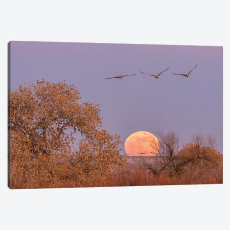 USA, New Mexico, Bosque del Apache National Wildlife Refuge. Full moon and sandhill cranes. Canvas Print #JYG734} by Jaynes Gallery Canvas Art