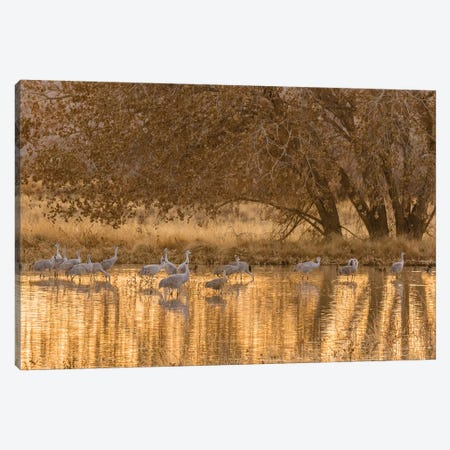 USA, New Mexico, Bosque del Apache National Wildlife Refuge. Sandhill cranes in water at sunset. Canvas Print #JYG741} by Jaynes Gallery Canvas Wall Art