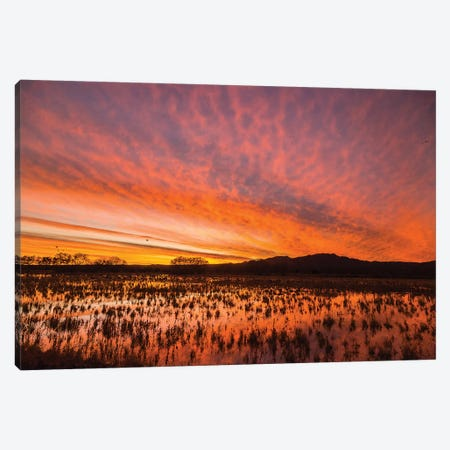USA, New Mexico, Bosque del Apache National Wildlife Refuge. Sunset on bird flock in water. Canvas Print #JYG745} by Jaynes Gallery Canvas Art Print