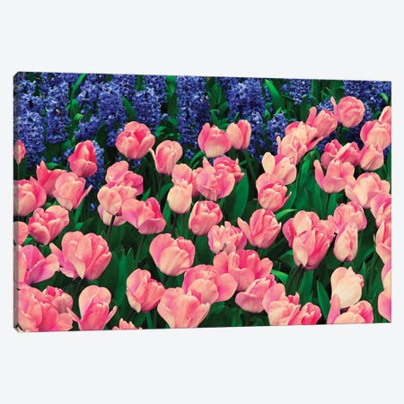 The Netherlands, Lisse. Close-up of flowers III Canvas Print #JYG74} by Jaynes Gallery Canvas Wall Art