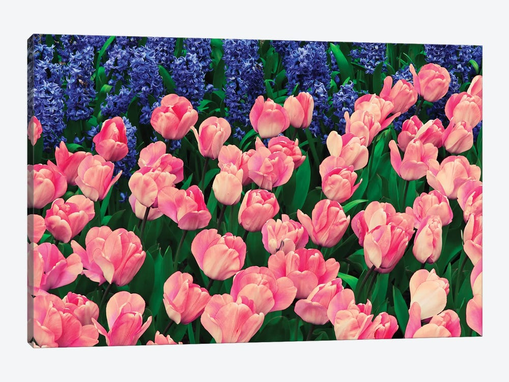 The Netherlands, Lisse. Close-up of flowers III by Jaynes Gallery 1-piece Canvas Wall Art