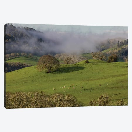 USA, Oregon, Whistler's Bend County Park. Overview of sheep in pasture.  Canvas Print #JYG751} by Jaynes Gallery Art Print