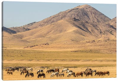 USA, Utah, Tooele County. Wild horse herd grazing.  Canvas Art Print