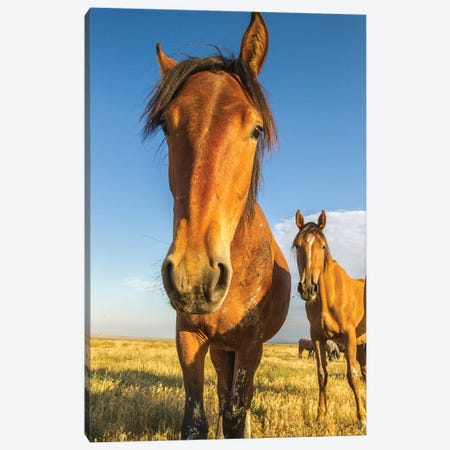 USA, Utah, Tooele County. Wild horses close-up.  Canvas Print #JYG765} by Jaynes Gallery Canvas Print