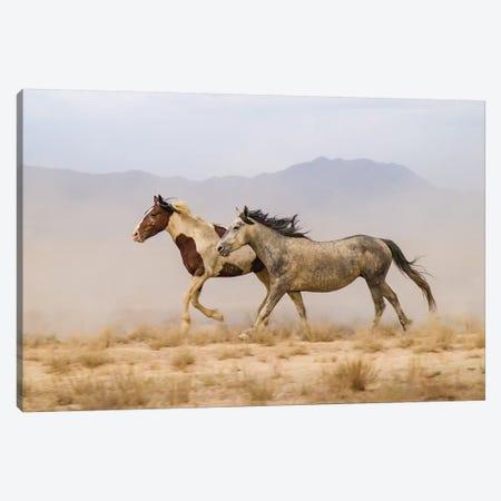 USA, Utah, Tooele County. Wild horses running.  Canvas Print #JYG770} by Jaynes Gallery Art Print