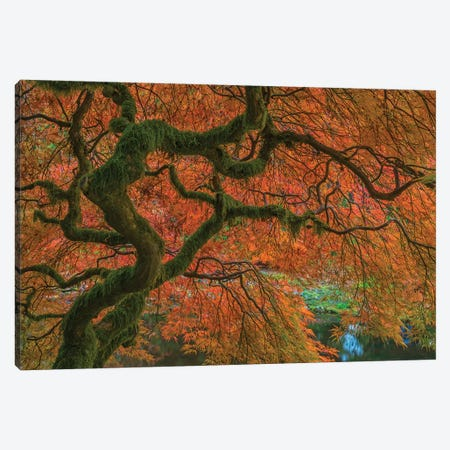 USA, Washington State, Bainbridge Island. Japanese maple tree in fall.  Canvas Print #JYG776} by Jaynes Gallery Canvas Wall Art