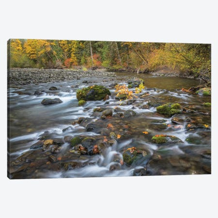 USA, Washington State, Olympic National Forest. Fall forest colors and Hamma Hamma River.  Canvas Print #JYG779} by Jaynes Gallery Canvas Art Print