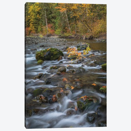 USA, Washington State, Olympic National Forest. Fall forest colors and river.  Canvas Print #JYG780} by Jaynes Gallery Canvas Art