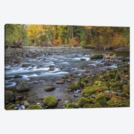 USA, Washington State, Olympic National Forest. Fall forest colors river.  Canvas Print #JYG781} by Jaynes Gallery Canvas Artwork